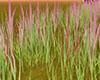 e Grass Animated