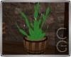 CG | Country Cactus 2