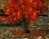 ~CR~Autumn Kissing Tree