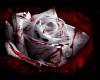 RoseShadow custom