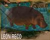 c Hippopotamus