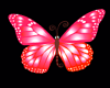 Pink & Orange Butterflie