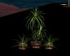 Sea Club Plant 2