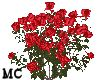 M~Spring Red Roses
