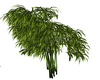 plant bambou 2