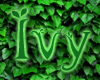 Ivy Leaves 3D