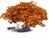 (J0) Maple Tree