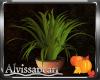 Pupkin Plant