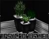!HK! Club Plant Pot
