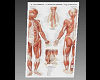 MJs Medical Chart 5