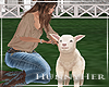 H. Baby Lamb
