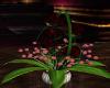 ~TQ~Basket Red Rose