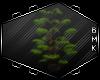 BMK:GothicRomanzza Plant
