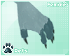 [Pets] Shayde   paws v2