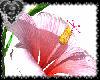 *J* Pink Flower