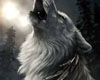 *R* Native wolf
