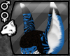 Blue Tiger Wicked Ears