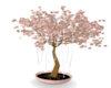 Peach  Flowering Tree