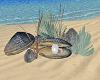 Beach Pearl Decor