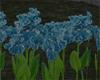 blue iris flower field