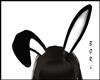 Bunny Black Ears