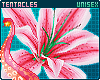 🌺 Pua'a   Flowers 6