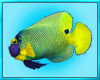 Scuba Dive Fish