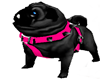 @BLACK PUG ANIMATED