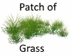 !Patch of Green Grass