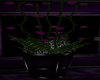 PDL Rose Plant