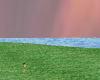 {D}open field