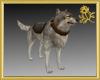 Warrior Wolf Pet