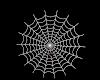 Spider & web