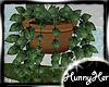 Summerset Hanging Plant
