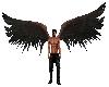 Black Wing Animated M/F