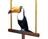 Animated Toucan