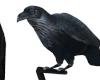 !L! Raven