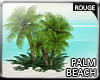 |2' Palmtree III