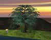 Retirement Trees.