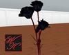 {WK}black roses 4 gricke