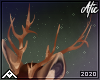 Stag | Antlers