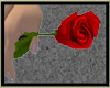 Rose for Yumi(MM)