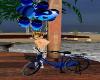 ~TQ~blue Balloon Bike