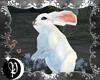 🌙 usagi bunny