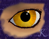 Amber Eyes M