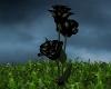 [MM] Black roses