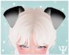 Y| Puppy Ears Black