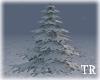~T~Snowy Winter Tree
