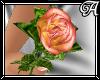 !A! Peach Single Rose