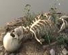 Skelet on ground